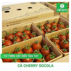 Cà Cherry Socola