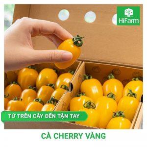 Cà cherry vàng