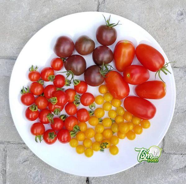 Cà chua socola có tốt không? Lợi ích khi sử dụng mỗi ngày!