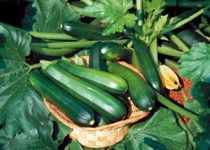 """Bí ngòi loại quả dân dã lại được coi là """"bậc thầy"""" bổ sung dinh dưỡng tự nhiên"""